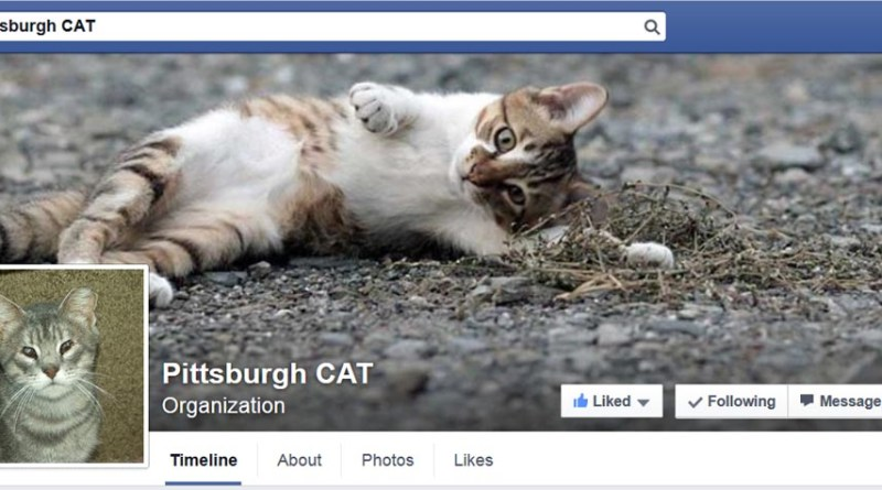 pittsburgh cat