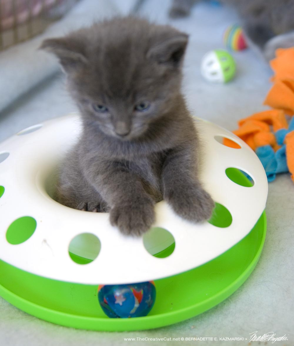 Are Petsmart Cats Rescues