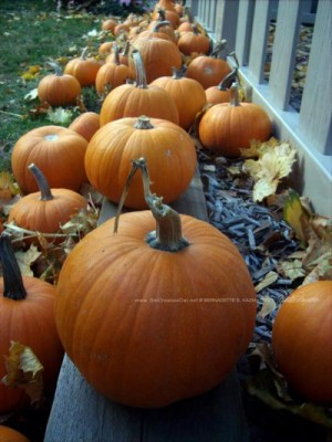 Pumpkin assortment.