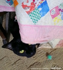 black cat with quilt