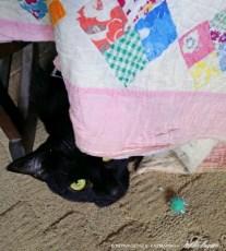 black cat with quilt