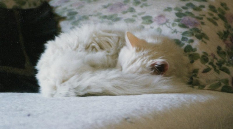 white cat sleeping on bed