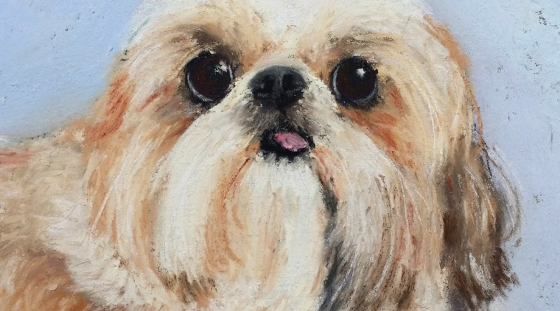 portrait of shi tzu