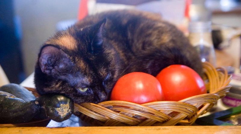 tortoiseshell cat in basket with vegetables