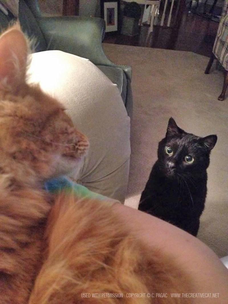 orange cat and black cat