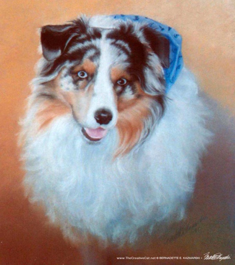 portrait of australian shepherd