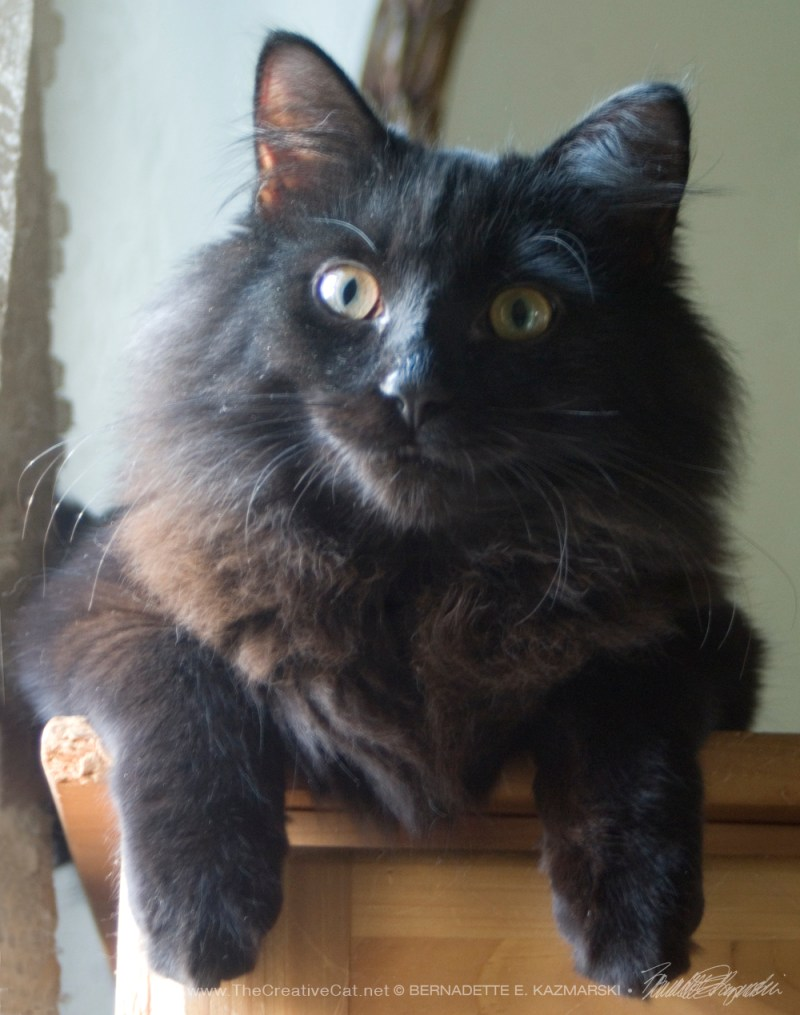 long-haired black kitten