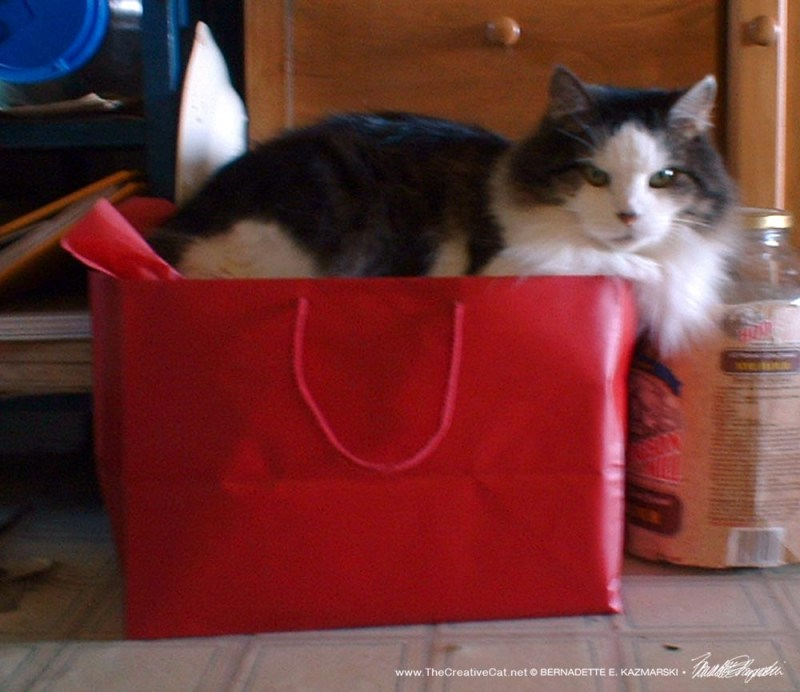 tabby and white cat on box