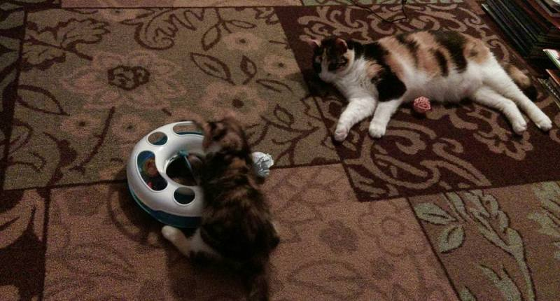 Lucy watches Charlie play with the original track ball.