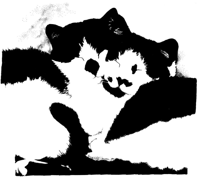 ink sketch of two black and white cats