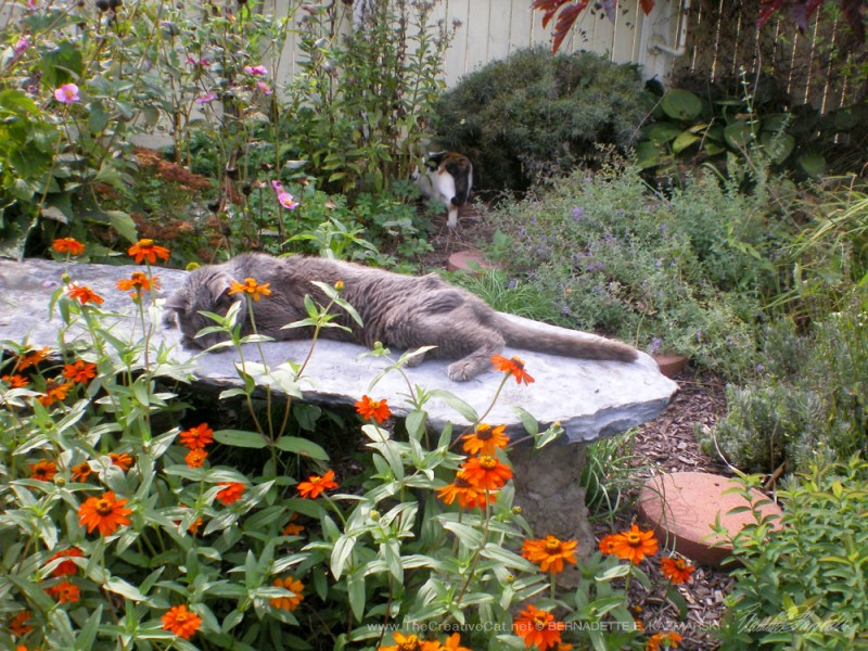 The stone bench in Judi's garden with Houdini napping.