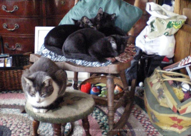 The kittens fall asleep asking questions of Namir.