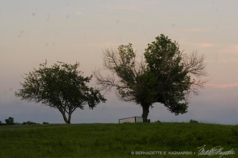 two apple trees at dusk