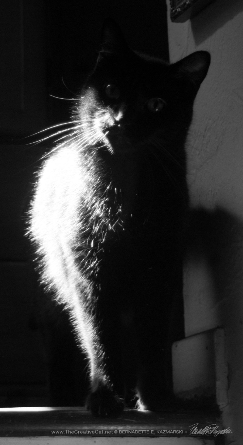 balck cat in black and white