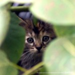 kitten in brush