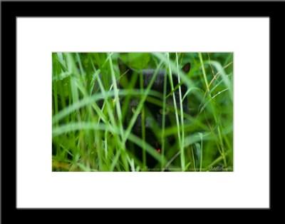The Huntress: Listening, framed photo.