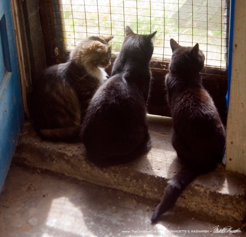 three cats at door