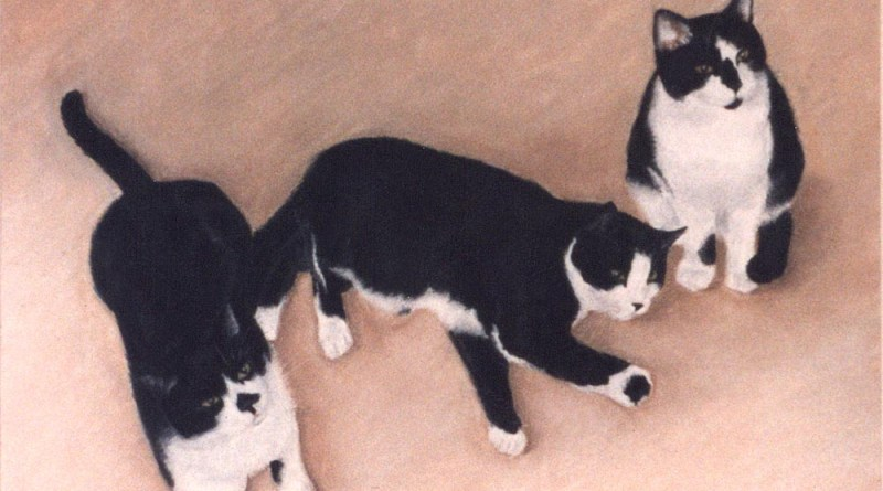 Three Black and White Cats, pastel, 16 x 22 © Bernadette E. Kazmarski