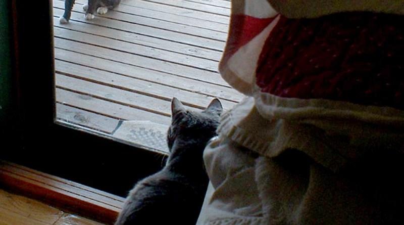 cat inside watching cat outside