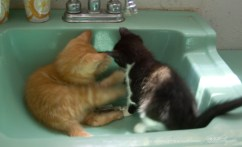 Crayola and Zorro explore the overflow drain in the sink.