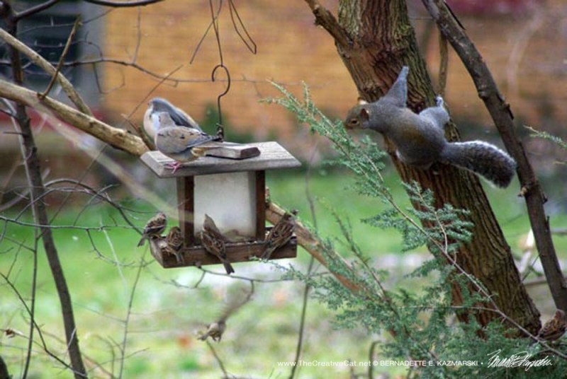 Everyone at the feeder.