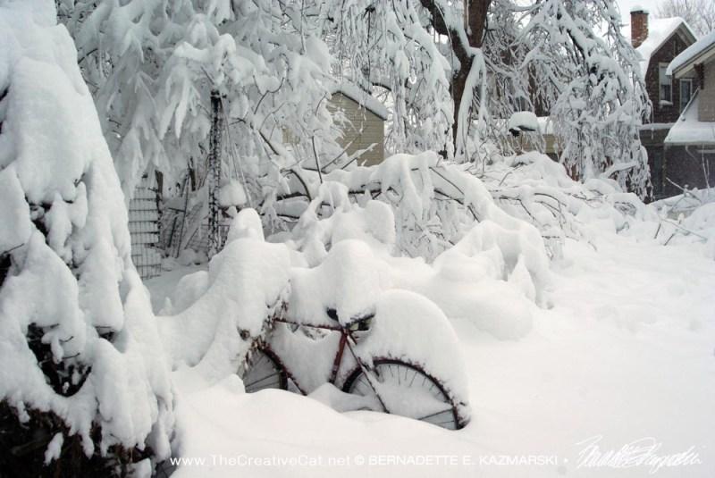 Backyard and bicycle