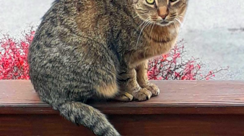 cat on railing