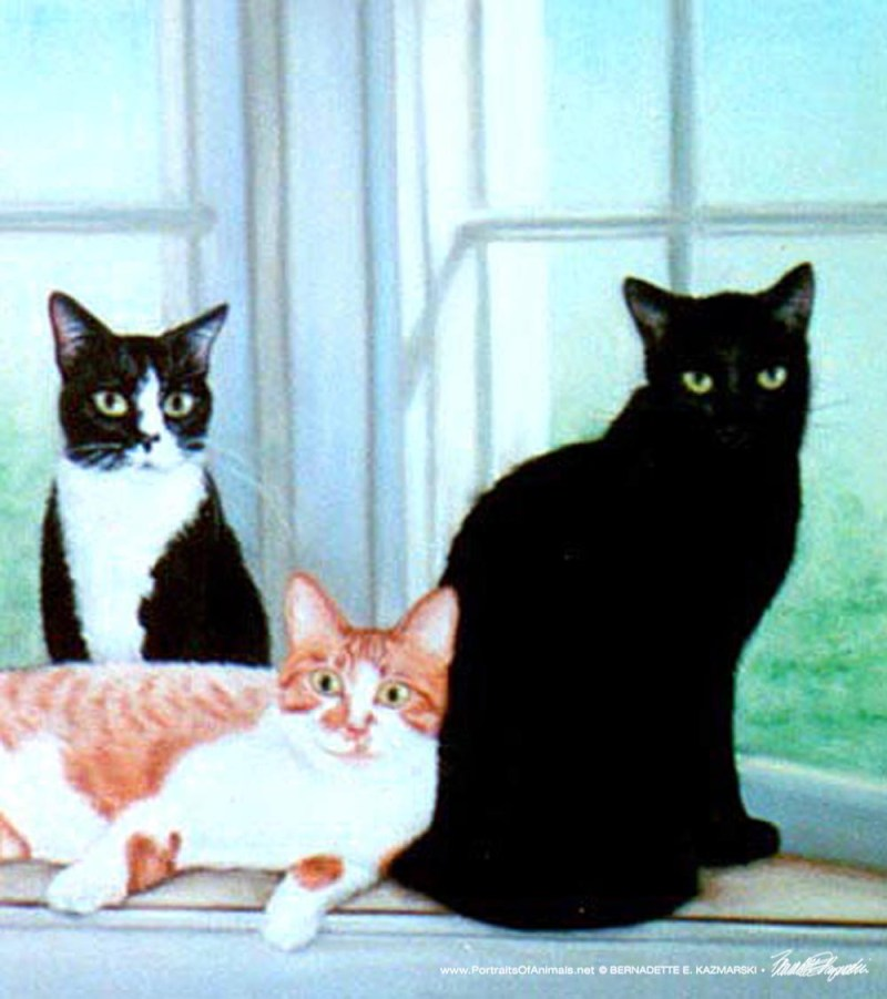 O.G. loved everyone while Veda was a little skittish and Miss Kitty kept to herself.
