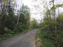This is what the major trails look like, just off the road.
