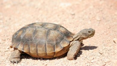 344-year-old tortoise dies