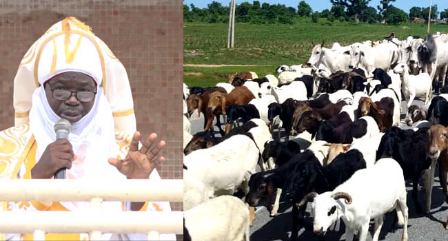 Photo collage of Emir of Muri Empire, Abbas Tafida, and a herd of cows. (Photo credit: Channels Television)
