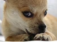dog_licking_paws11