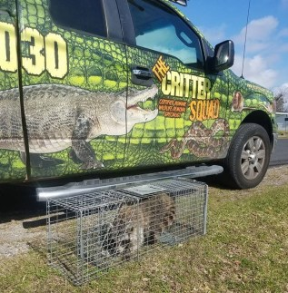 League City TX Raccoon Control Picture