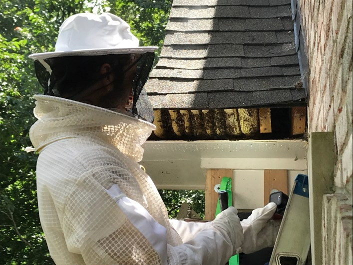 image of hive removal