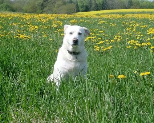 Pentingnya Menjaga Kesehatan Diri Dari Liur Anjing Berbahaya
