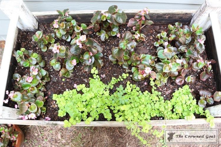Lavender Gardener's Scrub-7