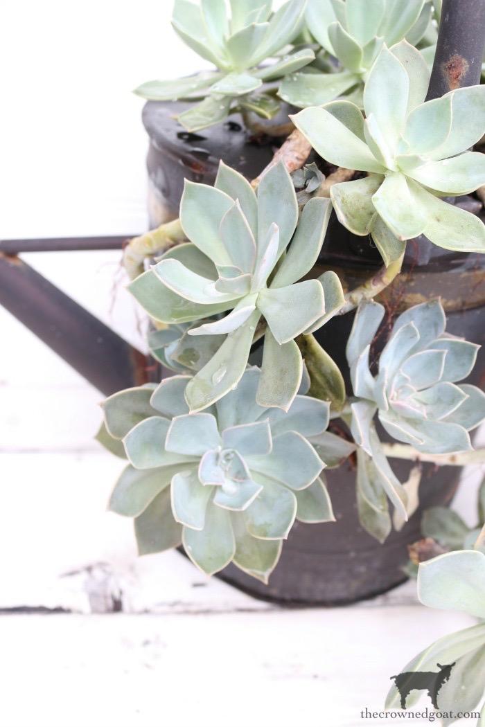 Easy-Succulent-Garden-The-Crowned-Goat-4 Don't Trash Your Old Firepit DIY Summer