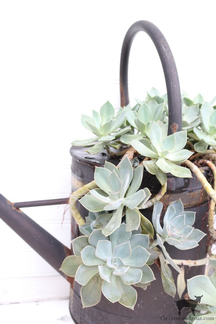 Watering-Can-Succulent-Garden-The-Crowned-Goat-3 Don't Trash Your Old Firepit DIY Summer