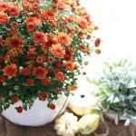 Festive-Fall-Tablescape-Tips-The-Crowned-Goat-12 Decorating
