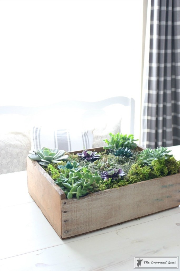 Spring Succulent Centerpiece-12