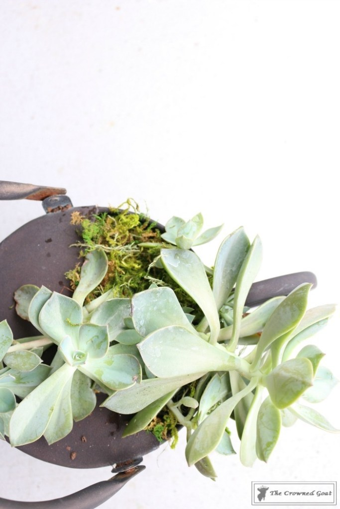 How to Create a Watering Can Succulent Centerpiece-9