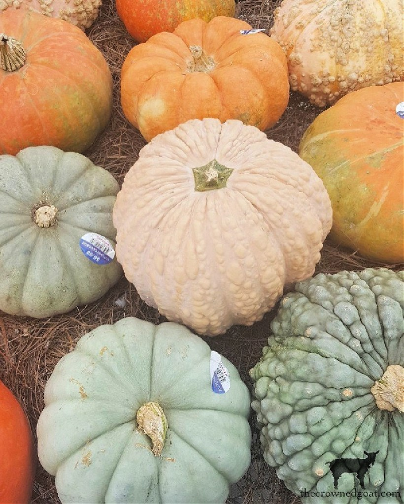 40 Fall Bucket List Ideas-Visting The Pumpkin Patch-The Crowned Goat