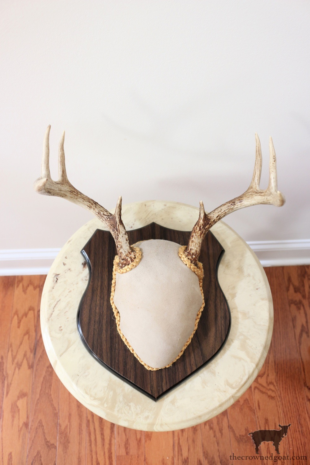 Vintage Decorative Antlers-The Crowned Goat