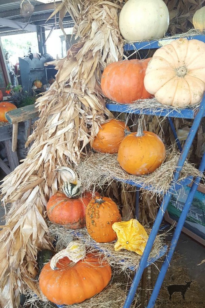 Fall in the Field at Renningers Mount Dora