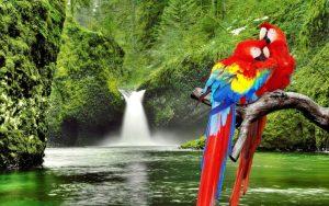 macaw-love-birds