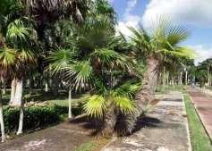 palmas-jardin-botanico-cuba