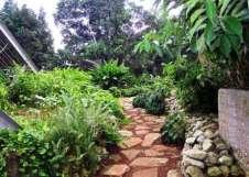 plantas-jardin-botanico-cuba