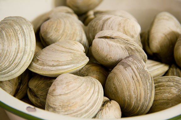 different types of fish univalve clams