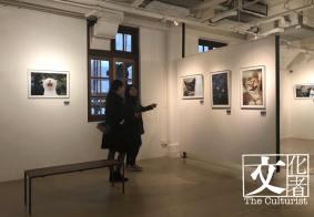 20年 -吳毅平 貓 攝影展6