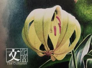 曾孝濂認為每花每草都不同,都有性格。